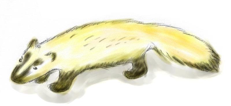 謎の小動物